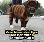 tiger.jpg auf www.funpot.net