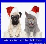 Warten-auf-den-Nikolaus.jpg auf www.funpot.net