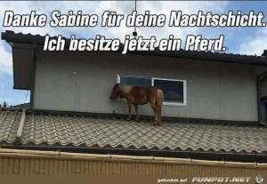 Dank-Sabine-habe-ich-jetzt-ein-Pferd.jpg auf www.funpot.net