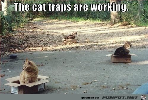 Die Katzenfallen funktionieren