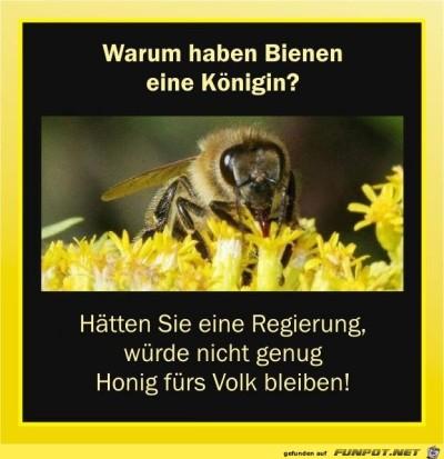 warum-haben-Bienen-eine-koenigin.jpg von Fabioma