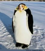 Dämlicher-Anzug.jpg auf www.funpot.net