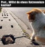 Katzengras-Verkäufer.jpg auf www.funpot.net