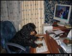 PC-Hund.jpg auf www.funpot.net