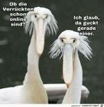 Sind-die-Verrückten-schon-online.jpg auf www.funpot.net