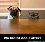 Wo-bleibt-das-Futter.jpg auf www.funpot.net