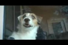 Ein Hund tressirter Hund