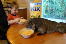 kid eats breakfast with pet iguana