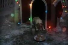 Hunde-WeihnachtsTraum