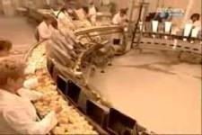 79285-usine de poussins