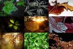 Blätter.ppsx auf www.funpot.net