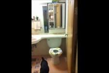 Nem s os gatos sabem utilizar o sanitrio