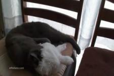 Poes met koude oren - Katze mit kalten Ohren