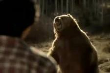 Doritos Bear Bold