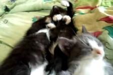 die Schlafenden