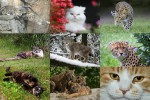Cats-4---Katzen.ppsx auf www.funpot.net
