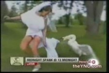 wenn die Braut vor dem Schwan flüchtet