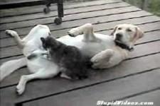 Katze  Hund 1 4 MB