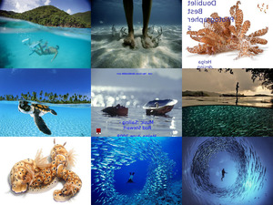 Unterwasserbilder von David Doubilet
