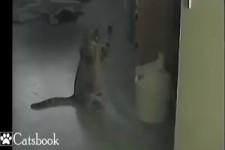 Katzen-Spiel