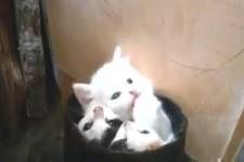 Katzen-Kessel