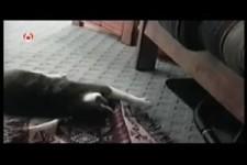 Hund und Katze 1. 19. 11. 2010
