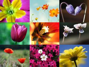 Traumhafte Aufnahmen von Blumen und Blüten