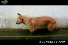 1a Wachhund