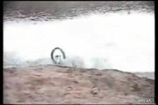 girl crashes bmx
