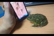 Frosch und Handyspiel