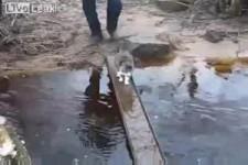 Katze mit extremer Wasserphobie