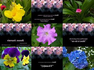 MERCI - Blumen mit franz. Sprüchen