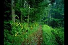Strauss-Cuentos de los bosques de Viena