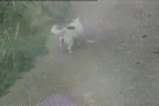Hund hat spass an rutschen