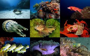 Unberührte Natur unter Wasser