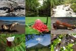 Costa-Rica-1.ppsx auf www.funpot.net