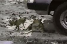 tierische-rache