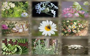 Blüten in den Jahreszeiten