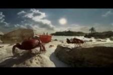 -  Crabs  - Budweiser