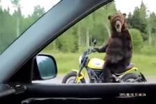 Spezieller Motorradfahrer