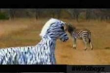 als Zebra verkleidet