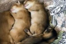 Katzen Bilder vom 05092010