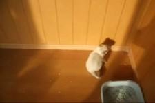 wie Kätzchen reingelegt werden
