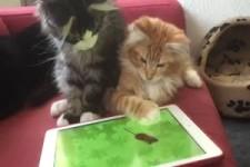 Katze und iPad