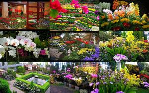 flowersingreenhouses