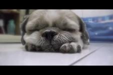 schlaf Huendchen schlaf