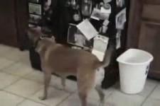 der Traum eines Hundehalters
