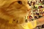 ach-diese-Katzen.wmv auf www.funpot.net