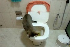 großartige Katze