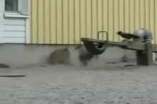 Ein Hase gegen drei Kraehen